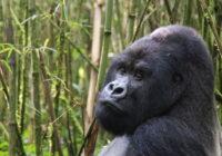 Wycieczka Uganda Ruanda Burundi