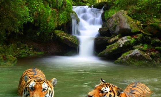 Wycieczka Sri Lanka