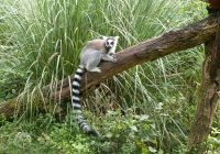 Wycieczka Madagaskar Reunion Majotta