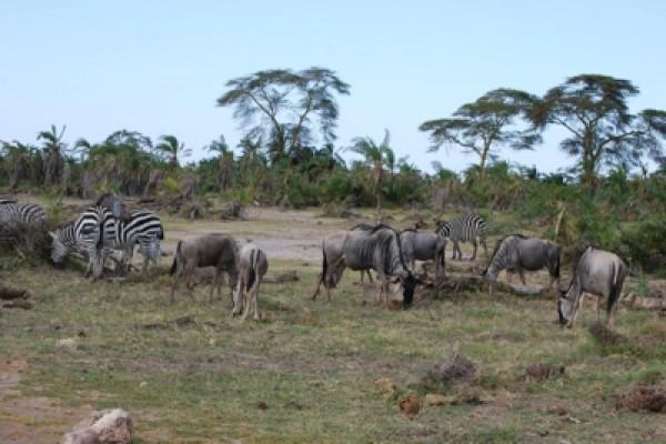 """Wycieczka doAfryki """"Namibia iPołudnie Afryki"""""""