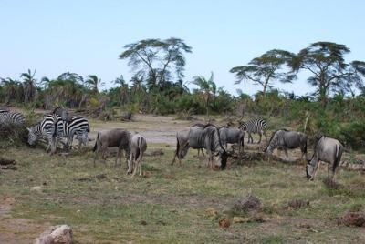 """Wycieczka doAfryki """"RPA iPołudnie Afryki"""""""