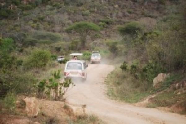 Safari wAfryce Tanzania Zanzibar