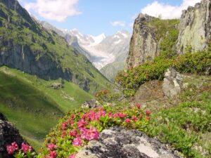 wycieczka objazdowa po szwajcarii