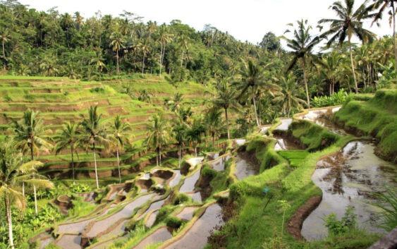 Wycieczka powyspach Indonezji