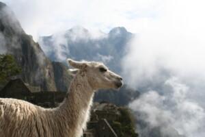 oferty nawycieczki objazdowe poAmeryce Południowej, takich krajach jak Brazylia (Amazonia), Argentyna, Chile, Peru, Boliwia, itd.